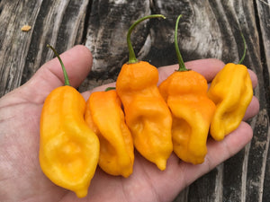 Bhut Indian Carbon Yellow (Pepper Seeds)