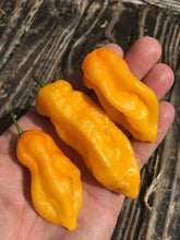 Load image into Gallery viewer, Bhut Indian Carbon Yellow (Pepper Seeds)