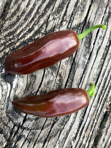 Jalapeno Brown (Pepper Seeds)