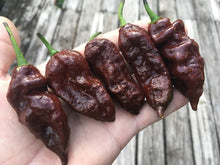 Load image into Gallery viewer, Bhut Jolokia Chocolate (Pepper Seeds)