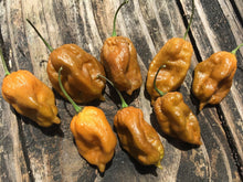 Load image into Gallery viewer, ButterScotch GS (Pepper Seeds)