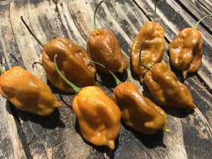 ButterScotch GS (Pepper Seeds)