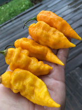 Load image into Gallery viewer, Bhut Jolokia Yellow (Pepper Seeds)