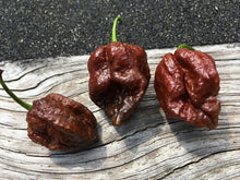 Load image into Gallery viewer, 7 Pot Chaguanas Chocolate (Pepper Seeds)