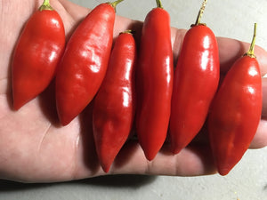 Challuaruro Red (Pepper Seeds)