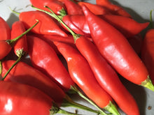 Load image into Gallery viewer, Challuaruro Red (Pepper Seeds)