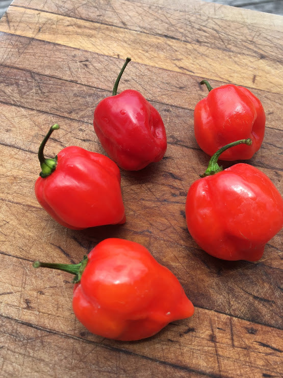 Habanero Caribbean Red (Pepper Seeds)