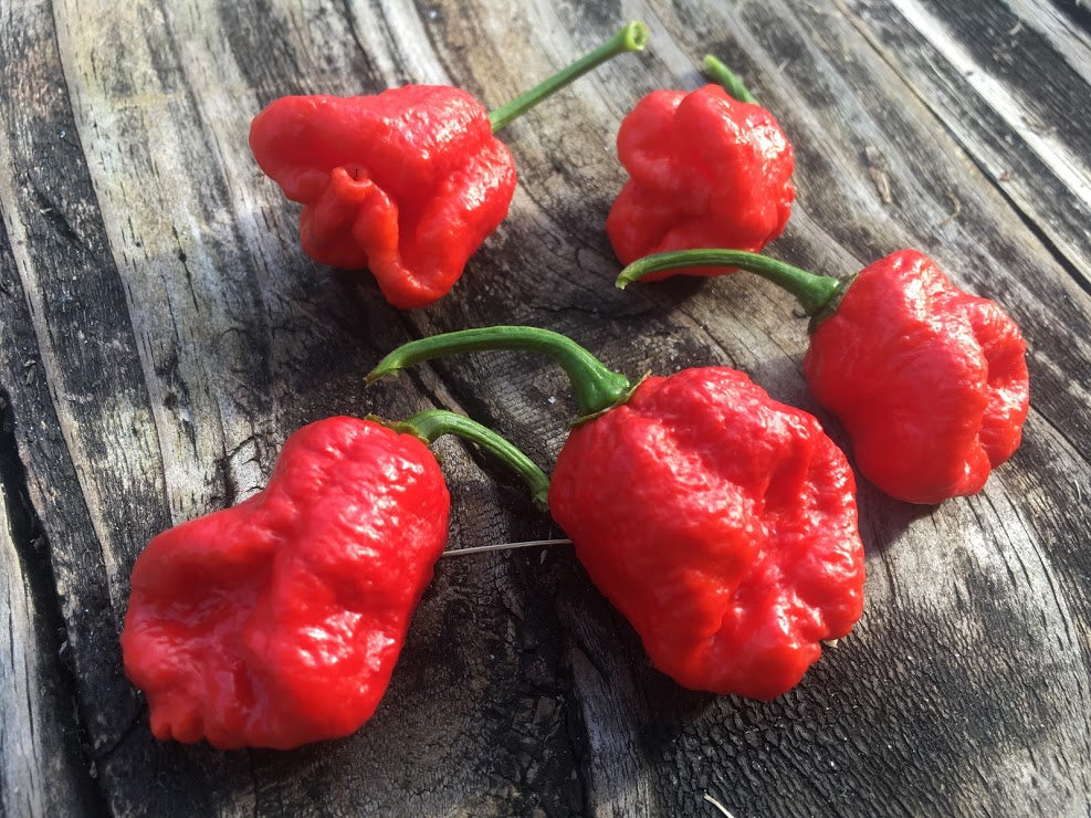 Dragons Breath (Pepper Seeds)(Bonus Only)
