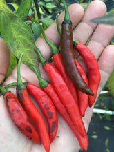 Load image into Gallery viewer, Dark Thai (Italia) (Pepper Seeds)