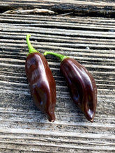 Load image into Gallery viewer, Fatalii Chocolate (Pepper Seeds)