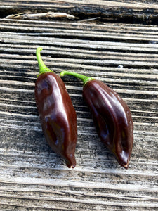 Fatalii Chocolate (Pepper Seeds)