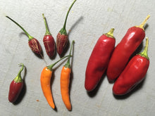 Load image into Gallery viewer, FiFi Tabasco Orange (Pepper Seeds)