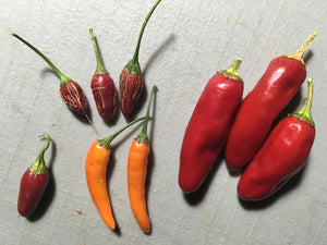 FiFi Tabasco Orange (Pepper Seeds)