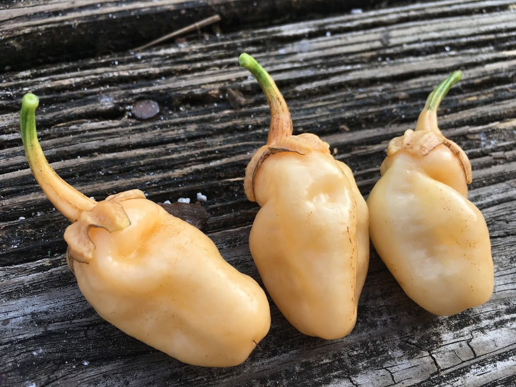 Jes's Morangum Peach (Pepper Seeds)(Limited)