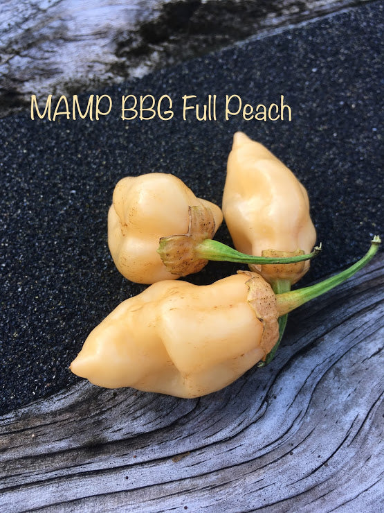 MAMP BBG Peach (Pepper Seeds)