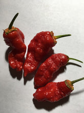Load image into Gallery viewer, MonsterGum Leopard Red (Pepper Seeds)