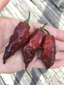 Maroon Tiger (Pepper Seeds)