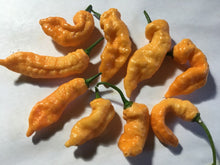 Load image into Gallery viewer, Orange & Peach TurdCicle (Combo Pack)(Pepper Seeds)