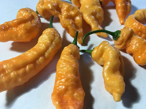 Orange & Peach TurdCicle (Combo Pack)(Pepper Seeds)