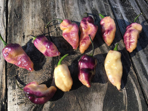 Pimenta Jolokia Peach Fire (Pepper Seeds)
