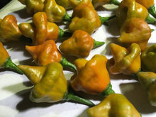 Load image into Gallery viewer, Pointed Mustard Habanero (Pepper Seeds)