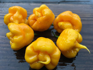 Reaper Yellow (Pepper Seeds)