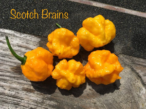 Scotch Brains (Pepper Seeds)