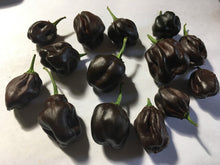 Load image into Gallery viewer, Swiss Chocolate (Pepper Seeds)