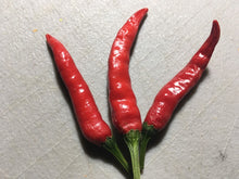 Load image into Gallery viewer, Thai Red Hot (Pepper Seeds)