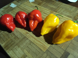 Wartryx Stretch Yellow (Pepper Seeds)