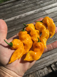 GhostScorpion Yellow (T-E) (Pepper Seeds)