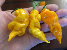Load image into Gallery viewer, GhostScorpion Yellow (T-E) (Pepper Seeds)