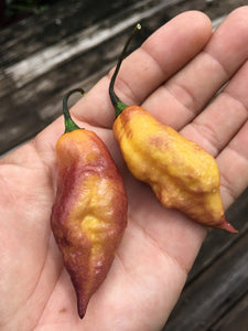 Yellow Tiger (Pepper Seeds)