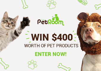 A One-Stop Destination for Everything Your Pets Need We Bet Your Pets Will Love Us!