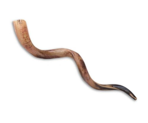 Schofar Jerusalem Shofar Kosher Yemenite Horn Polished Natural Showfar Schofar Jewish Yom kippur Elul blowing Large Chofar