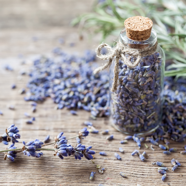 Dried Lavender (Intermedia)