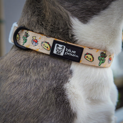 Dog Collar - Taco Fiesta