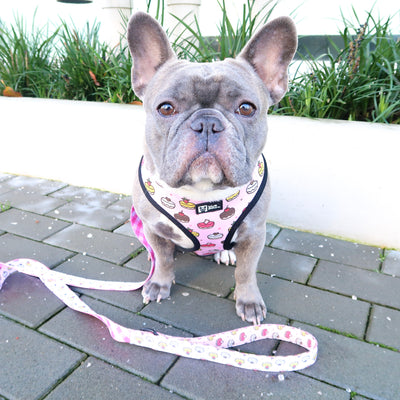 Reversible Dog Harness - Piece Of Cake - Blue Paw Co.