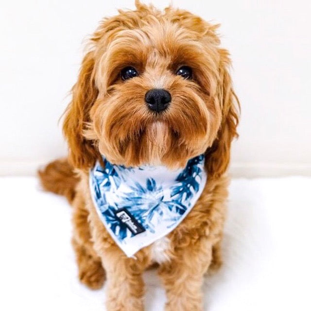 Dog Bandana - Posh Palms - Blue Paw Co.