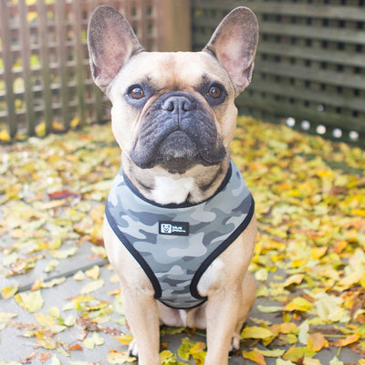 Reversible Dog Harness - Combat Camo - Blue Paw Co.