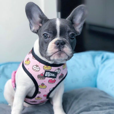 Reversible Dog Harness - Piece Of Cake