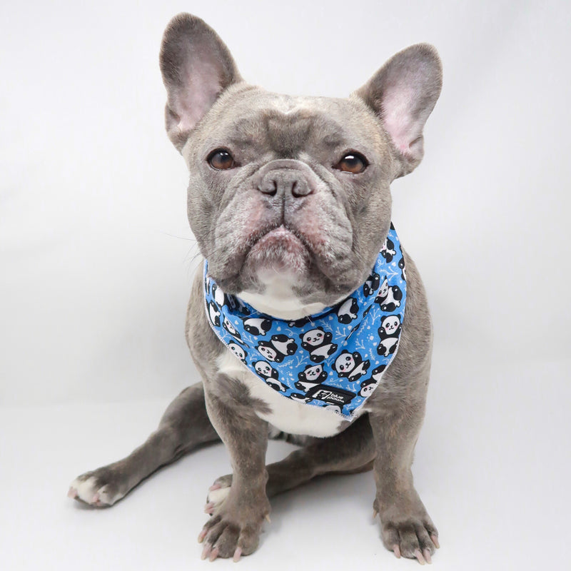 Dog Bandana - Roly Poly Panda - Blue Paw Co.