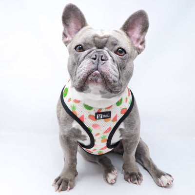 Reversible Dog Harness - Cheat Day (Final Sale)