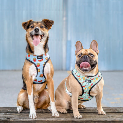 Reversible Dog Harness - Cheat Day