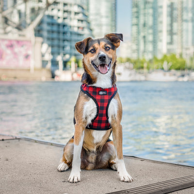 Adjustable Dog Harness - Ruffalo Plaid (Final Sale)