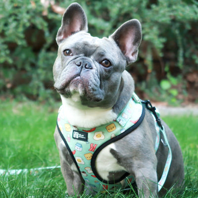 Adjustable Dog Harness - Thanks A Brunch