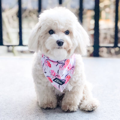 Cooling Dog Bandana - Rosa