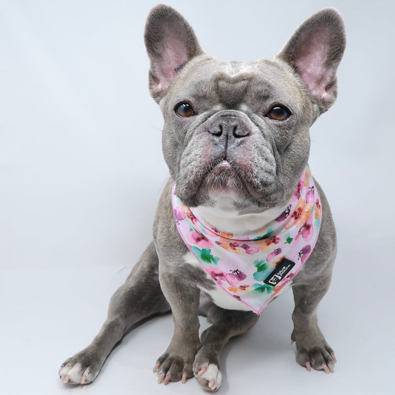 Cooling Dog Bandana - Full Bloom