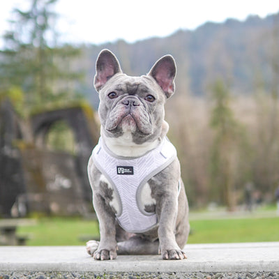 Adjustable Dog Harness - Silver Lining (Final Sale)