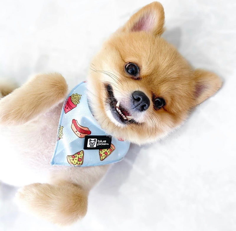 Cooling Dog Bandana - Cheat Day (Final Sale)